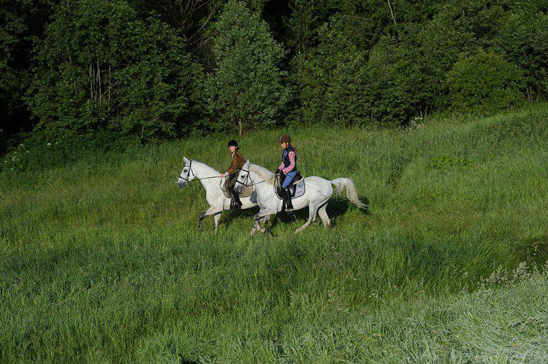 Отдых с конными прогулками подмосковье