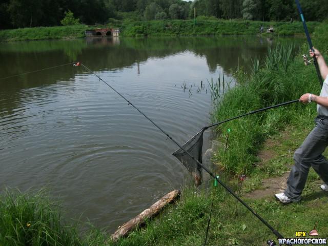 платная рыбалка в московской области без нормы